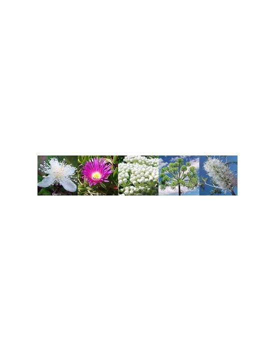 Flowers for Wisdom Aura spray Australian Flower Essences