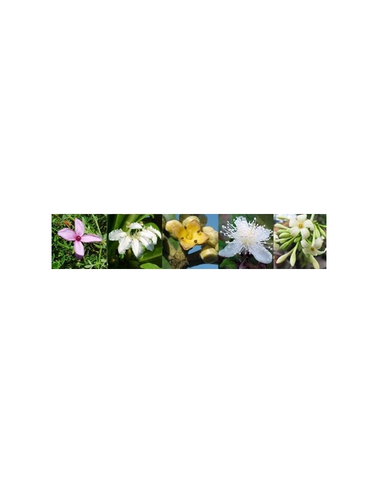 Balance Australische Bachblüten Vitalsprays