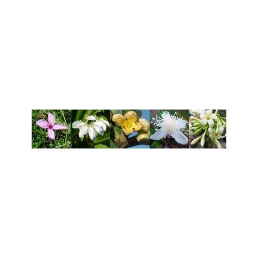Balance Flowers