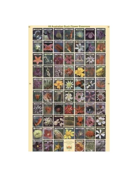 Poster Hochglanz 50 x 75 cm Australische Buschblüten